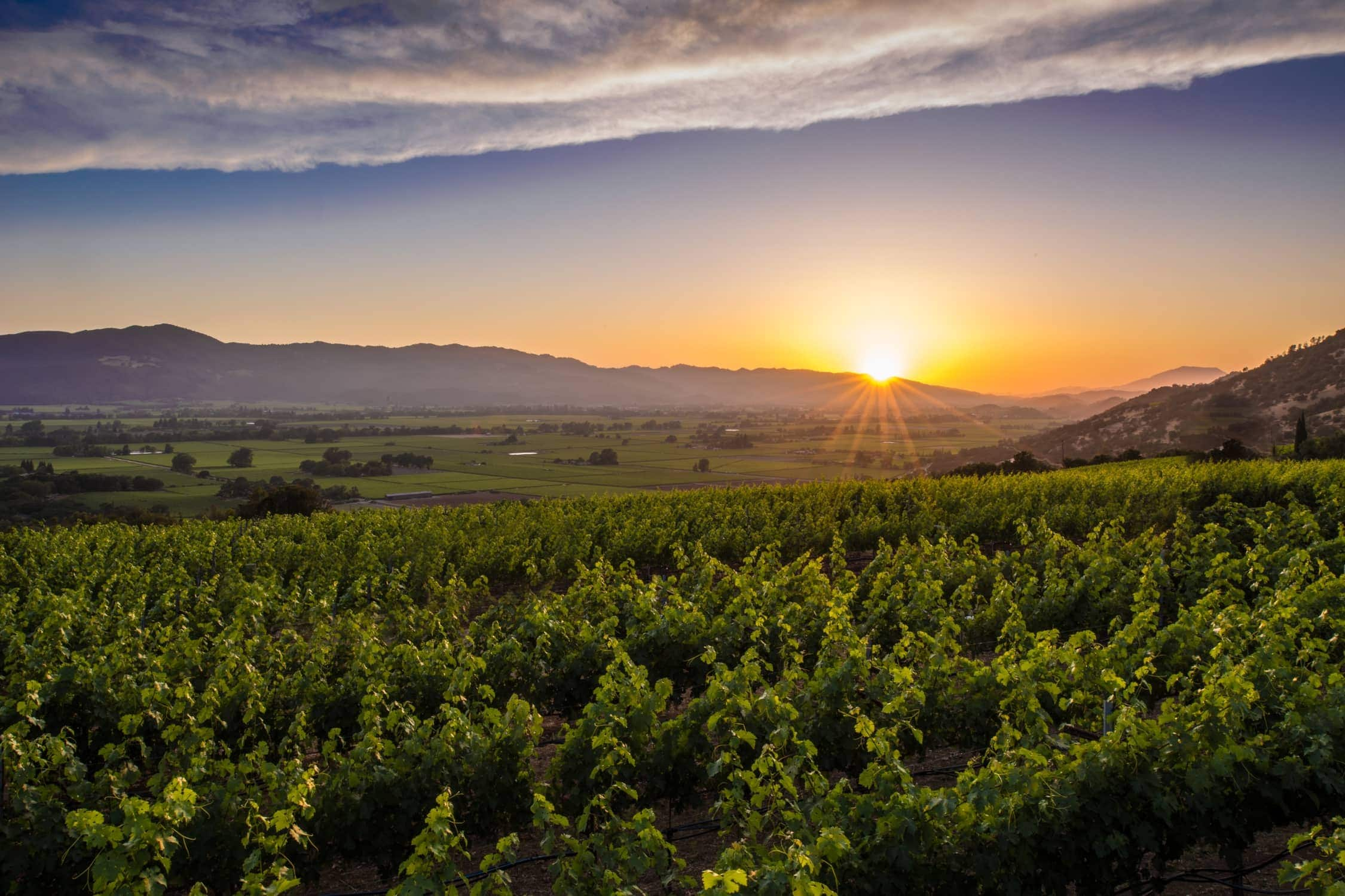 What Is The Best Time Of Year To Visit Napa Valley?
